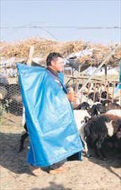 4 bin TLye çoban !
