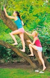 Ağaca tırmanmak hafızayı güçlendirir