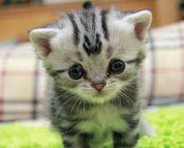Bu kedinin fotoğraflarına 5 saniye bakın!
