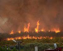 Bursada korkutan orman yangını