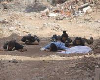 Nusaybinde 8 terörist daha teslim oldu