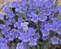 Bu çiçeği koparana 41 bin lira ceza
