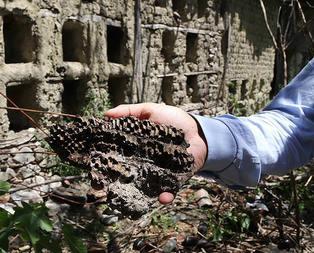 Bu arı kovanlarının dünyada başka örneği yok