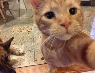 Kediler selfie çekerse!