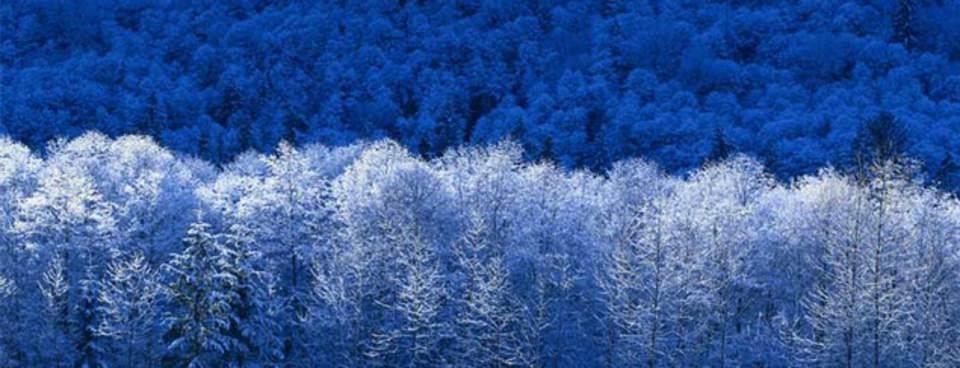 Kışın gelmesini iple çektiren fotoğraflar