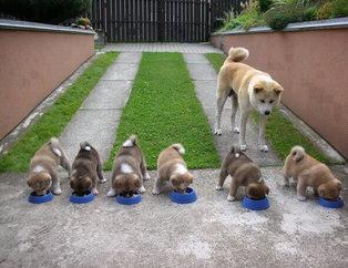 Sevimli yavrularıyla gurur duyan köpekler