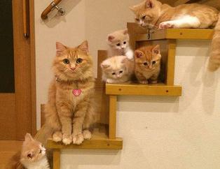 Yavrularıyla gururla poz veren kediler