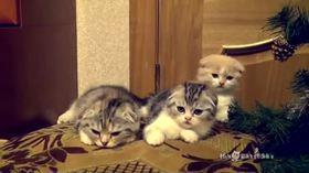 Sırayla esneyen sevimli kedicikler