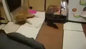Fare kediyi mahvetti