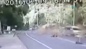 Tayland'da inanılmaz olay: Karayoluna ağaç düştü !
