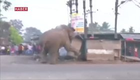 Hindistan'da Fil Saldırısı