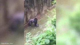 4 yaşındaki çocuk gorilin kafesine düştü